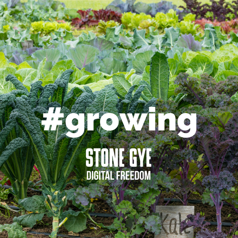 Growth is Purposeful and Intentional - StoneGye.com
